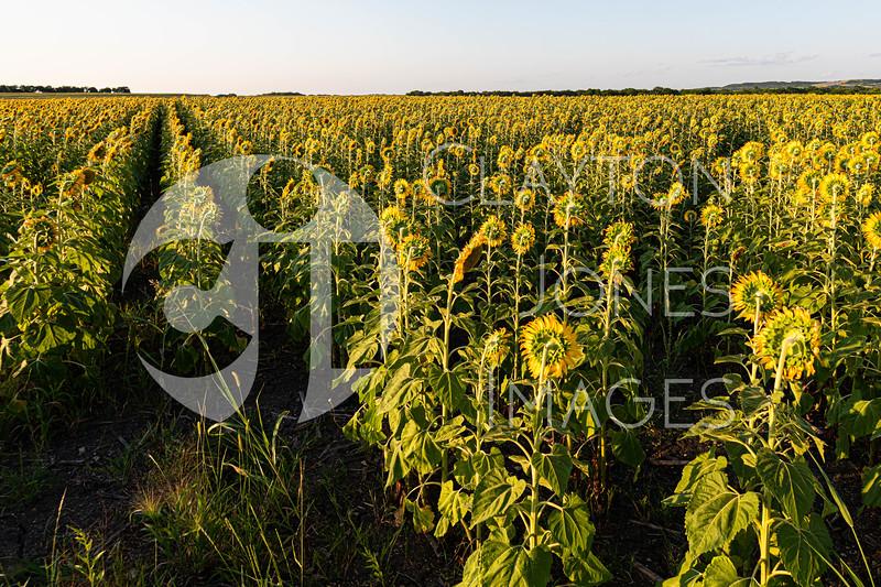 flowers_macro_6.20.2021-6.jpg
