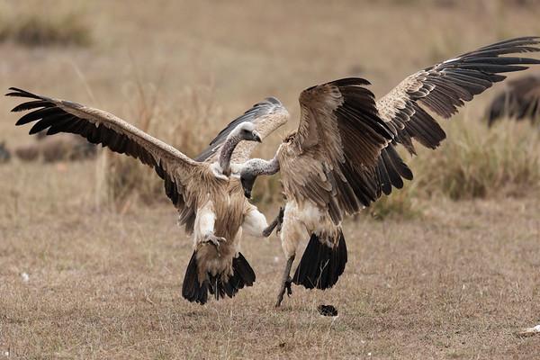 Indian Wildlife 2018
