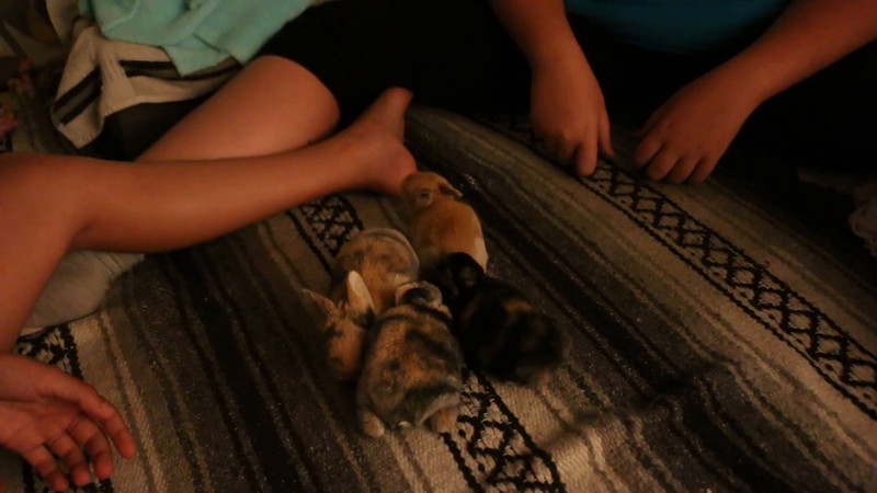 20160815 11 day old bunnies (5).MOV
