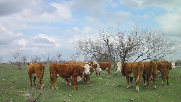 Oklahoma May 2012
