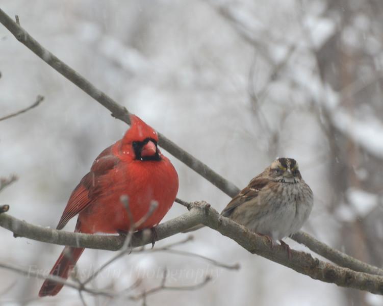 Bird Buddies.JPG