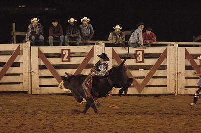 Cowboys & Bulls