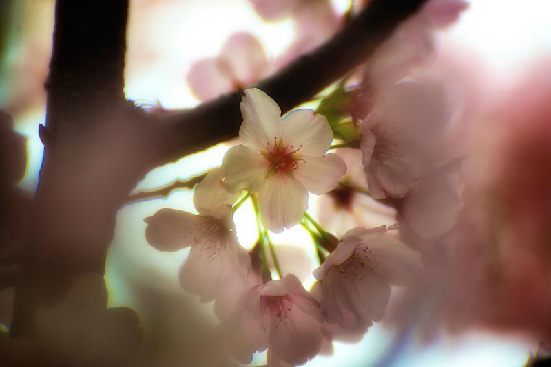 Soft Focus Bloom_DSC9173 - Version 2.jpg