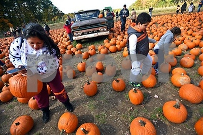 4 thieves steal nearly 200 pumpkins from New Jersey farm