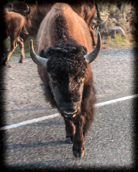Yellowstone-8854.jpg