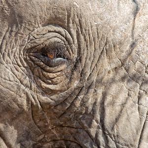 Elephants of Ruaha