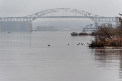 2020 04 03: Park Point, Duck Birding