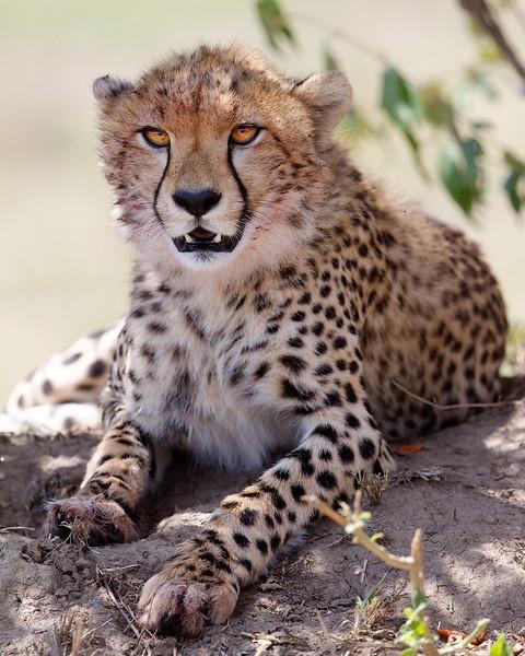 IMG_7351_cheetah.jpg