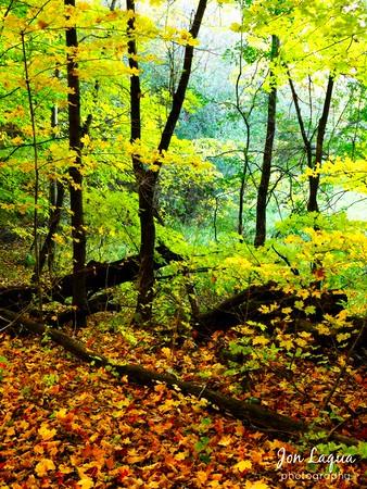 Murphy Hanrehan Regional Park
