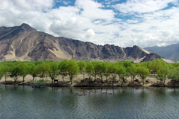 Tibet - 2007