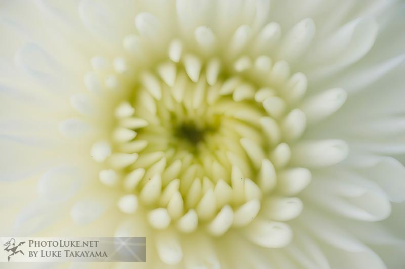 Flowers DSC_1568 copy.jpg