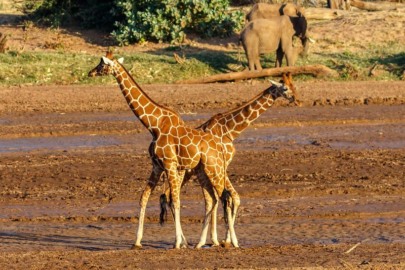 Kenya 2015-00182.jpg