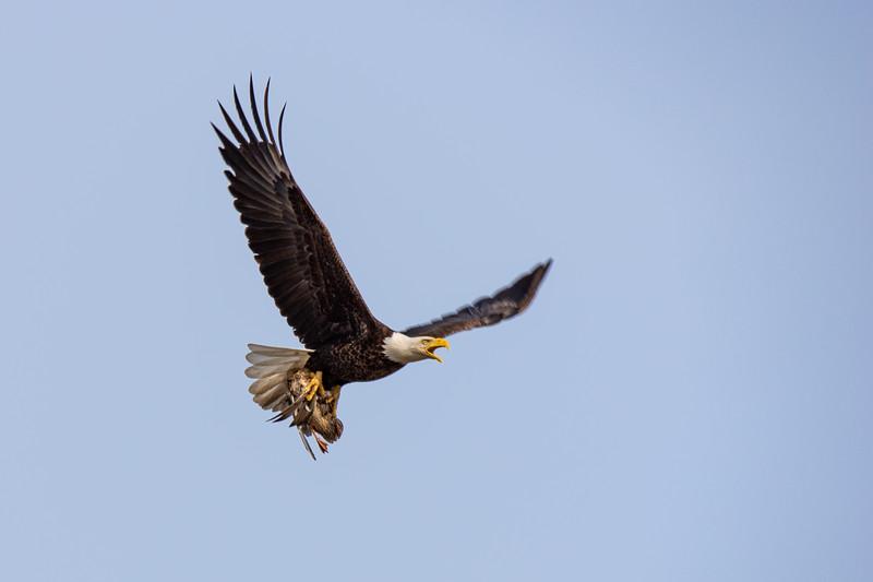 a Eagle no Wm_-6.JPG