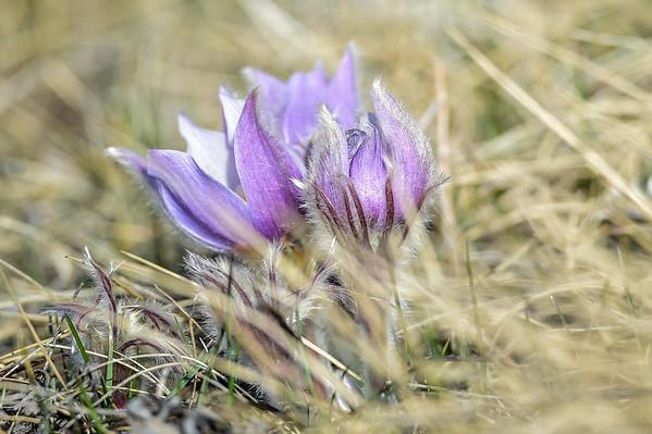 4-22-14 Spring Wild Flowers