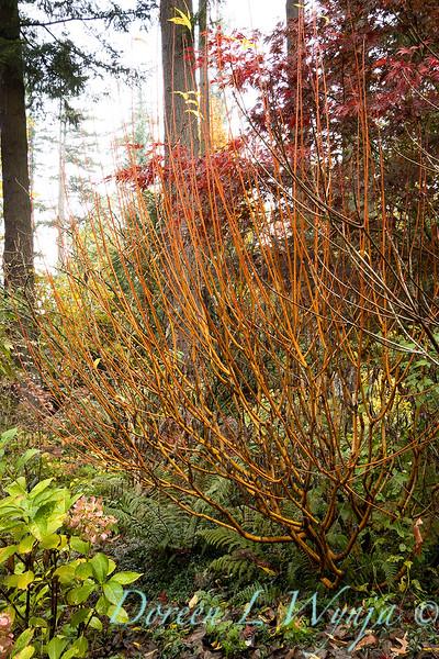 Dietrick fall garden_2083.jpg