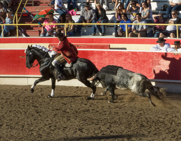 Cavaleiro Luis Rouxinol's horse gets very near the bull's horns!