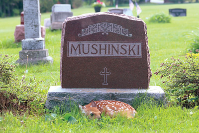 Three Lakes Cemetery Fawn