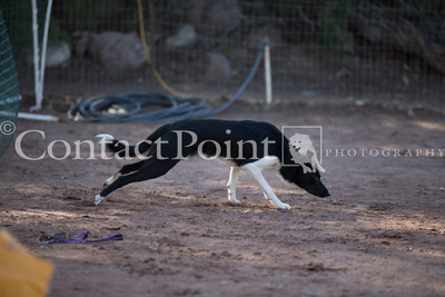 Contact Point Agility AKC Agility Trial - February 16, 2014