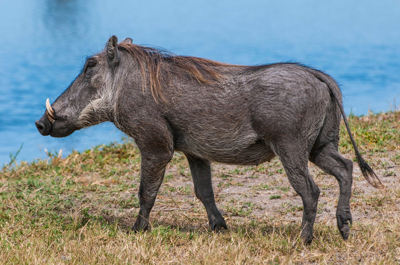 Warthogs-9.jpg