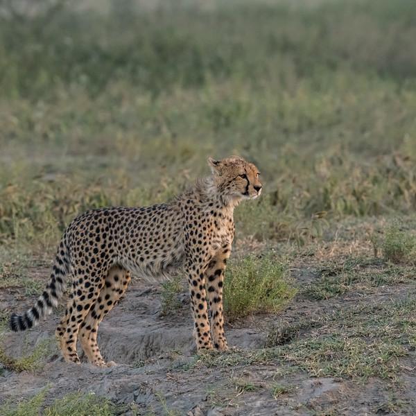 Tanzania_Feb_2018-101.jpg