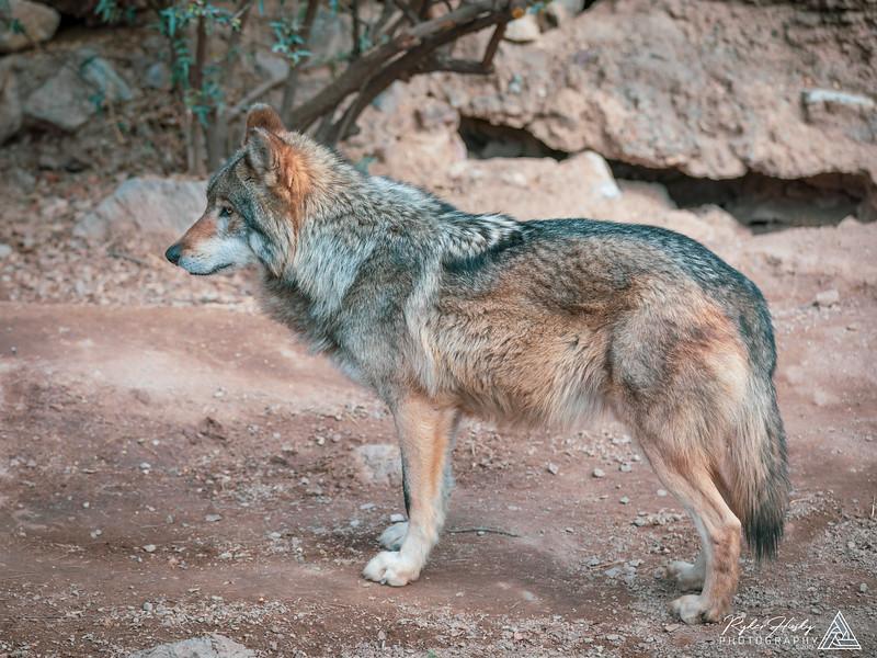 Arizona-Sonora Desert Museum-160.jpg
