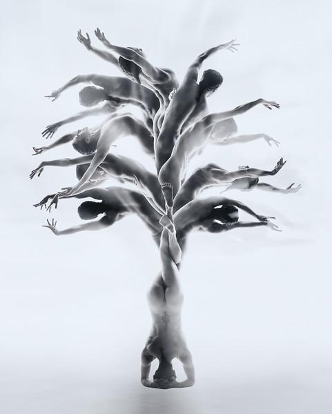 2017-11-18_Jasmin_tree_d_web.jpg