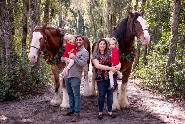 Clydesdales Nov 2019 - Rutherford