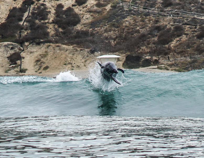Beacons dolphins-19.jpg