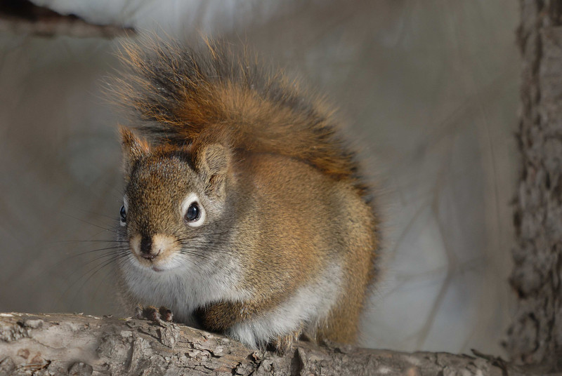 A squirrel poses briefly in the woods on the shores of Big Lake