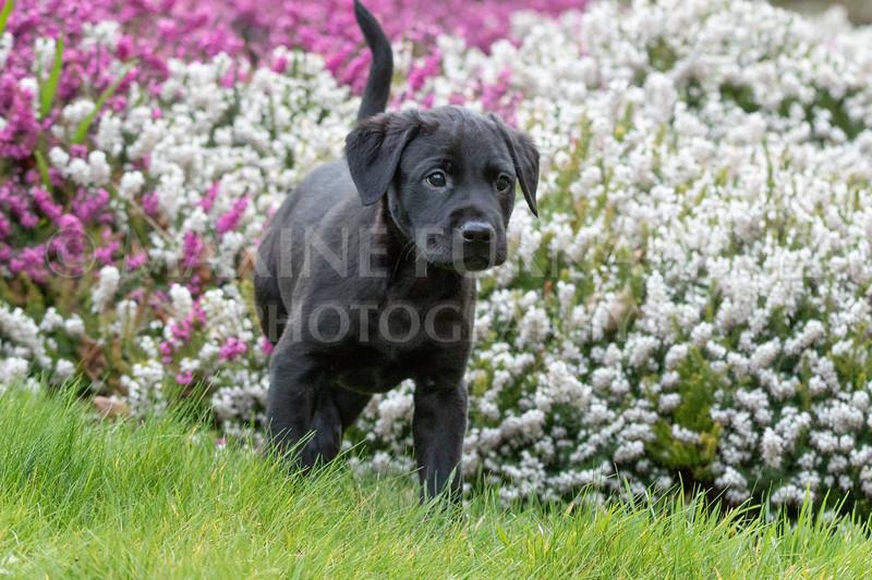 Weika Puppies 24 March 2019-6455.jpg