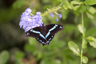 Aug 2nd 2013 Butterflies