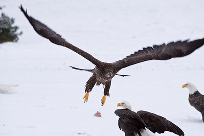 Eagles 11-23-08