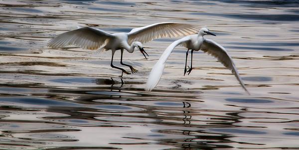 Birds at Nan Sang Wei 2012/3
