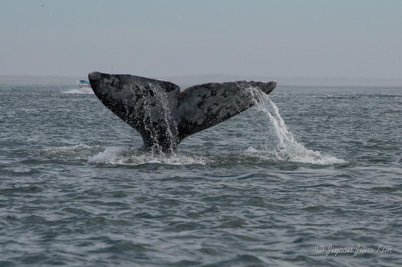 Mexico-Loreto-Whale-2335.jpg