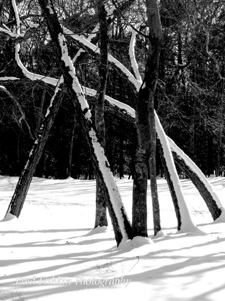 snow trees bw.jpg
