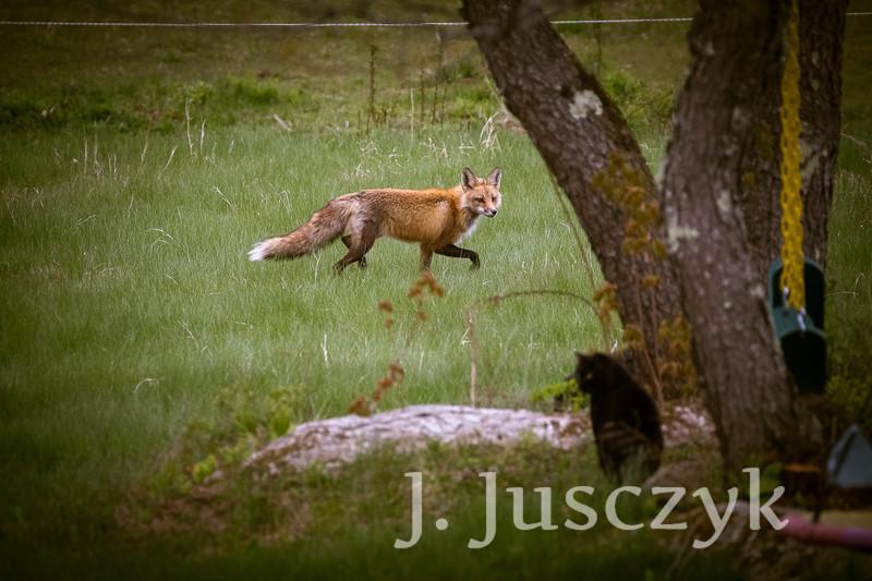 Jusczyk2021-6216.jpg