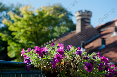 garden-plants-tuinplanten-plantes-de-jardin