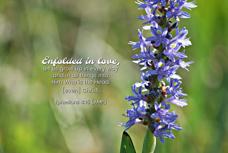 49_Ephesians4-15_BS_2013-10-12.jpg