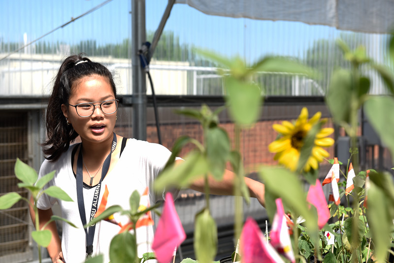Sunflowers-0102.jpg