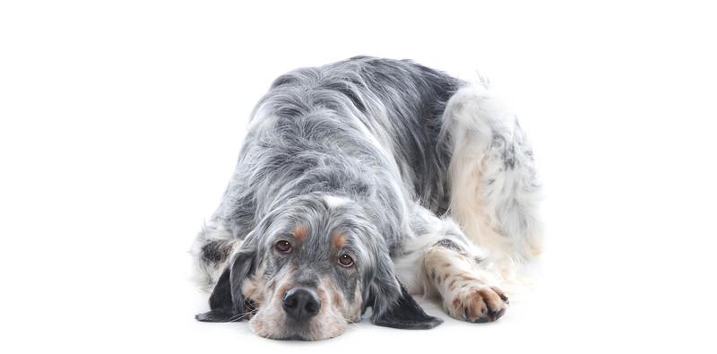 Dog-Grooming-Matlock-scaled.jpeg