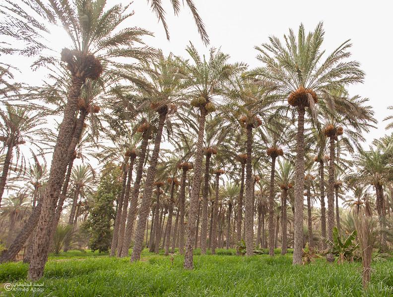 palm tree (5).jpg