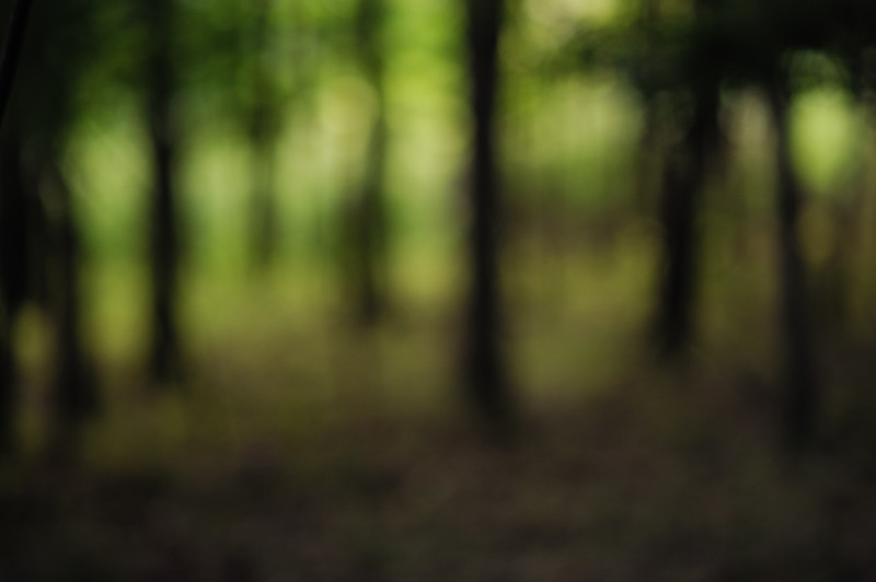 The Woods, Out of Focus