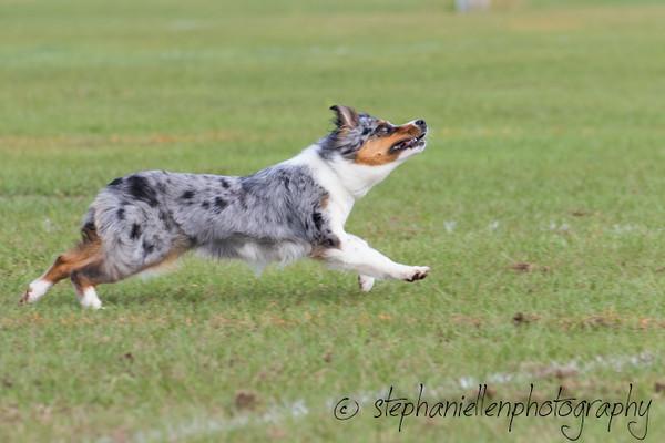 _MG_2436Up_dog_International_2016_StephaniellenPhotography.jpg