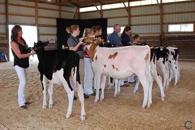 MN State Holstein Show 2018