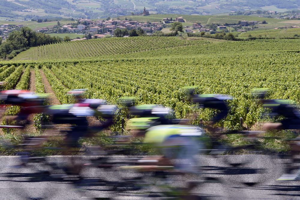 . The pack rides past vineyards during the 185.5 km twelfth stage of the 101st edition of the Tour de France cycling race on July 17, 2014 between Bourg-en-Bresse and Saint-Etienne, central eastern France. (LIONEL BONAVENTURE/AFP/Getty Images)