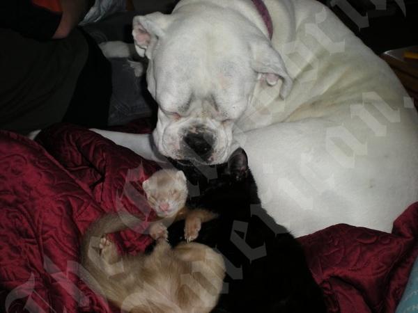 TY (dog), SID (ferret), and PRISSY (cat)