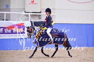 Class 8 Sm Show Pony 12hh & under