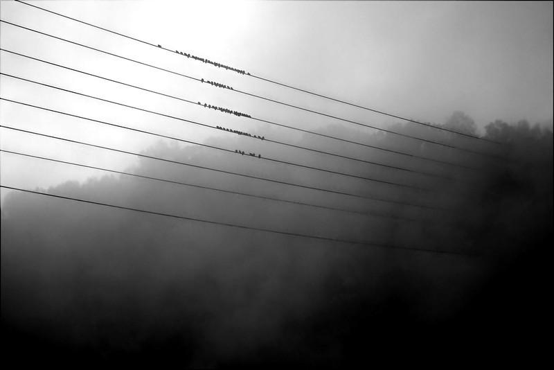 Wire Mist.jpg