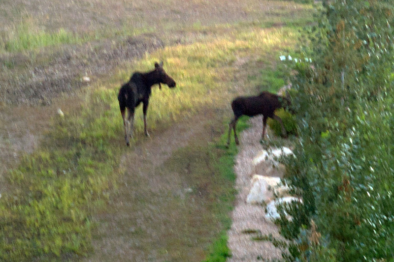 Moose outside of our hotel, view from our window