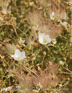 Southwest Flowers